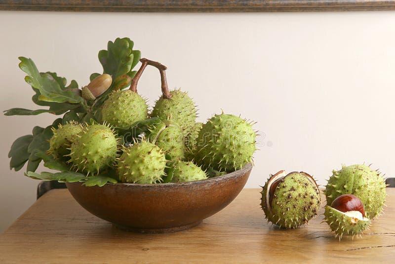 Le marron d'Inde vert et épineux porte des fruits dans l'intérieur images libres de droits