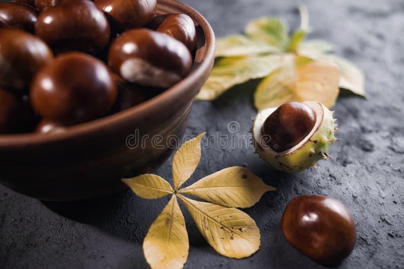 Le marron d'Inde vert et épineux porte des fruits dans l'intérieur photo libre de droits