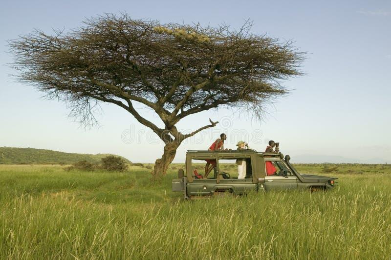 Le masai surveille et le touriste recherchent des animaux d'un Landcruiser pendant une commande de jeu à la garde de faune de Lew photos stock