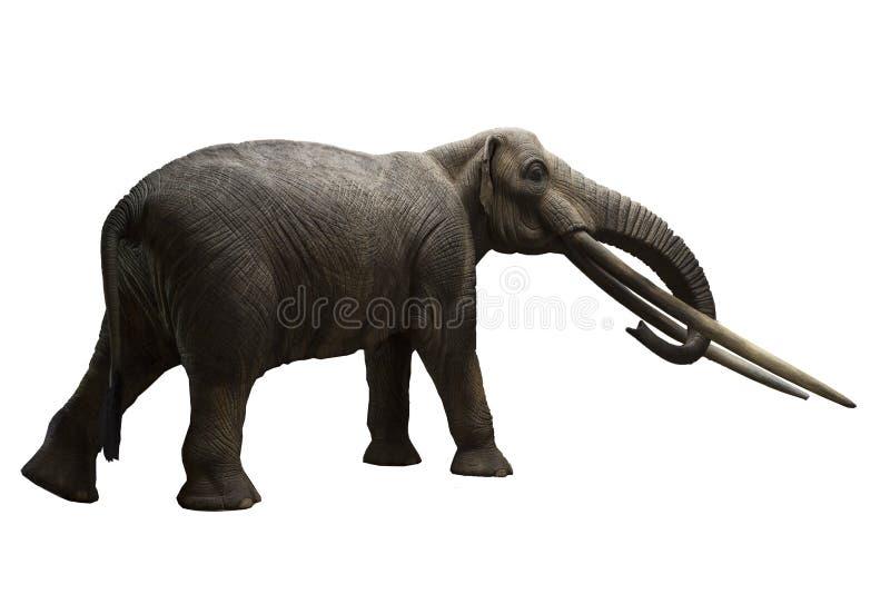 Le mastodonte de Rhodopean, arvernensis d'Anancus photos libres de droits