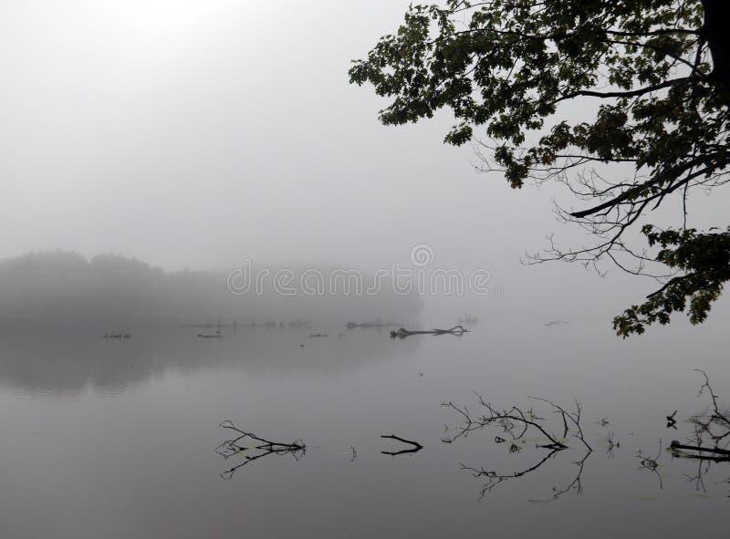 Le matin des Foggy dans un lac d'eau douce image stock