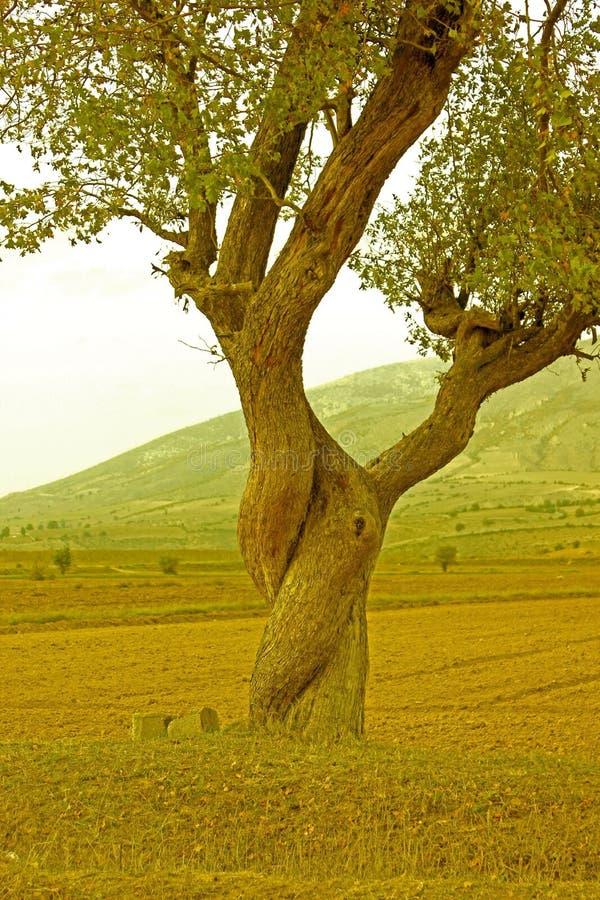 Le meilleur arbre au monde photographie stock