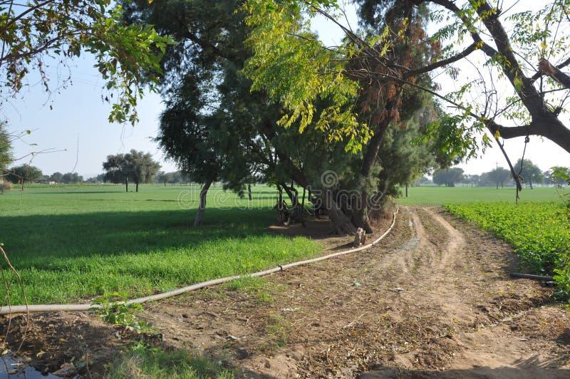 Le meilleur paysage indien de village très beau images stock