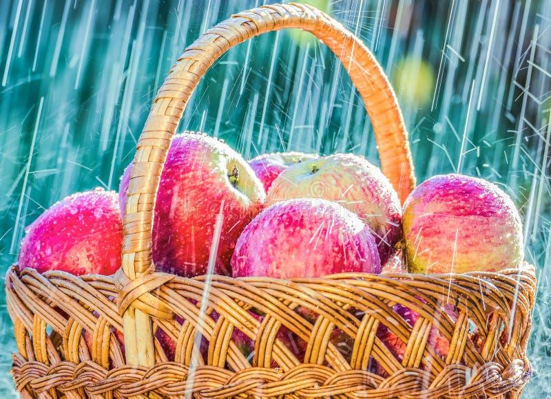 Le mele su una tavola nel giardino al di sotto di un'estate piovono fotografia stock