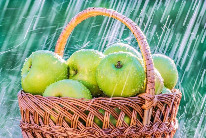 Le mele verdi su una tavola nel giardino al di sotto di un'estate piovono fotografia stock libera da diritti