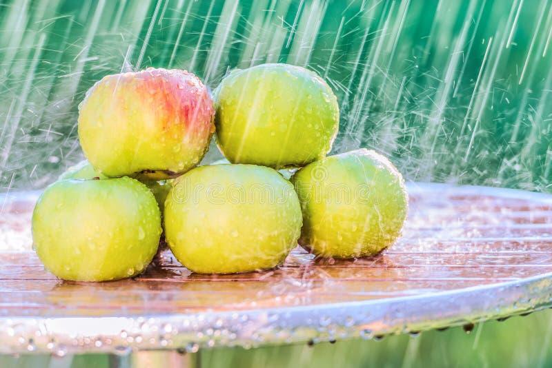 Le mele verdi su una tavola nel giardino al di sotto di un'estate piovono fotografia stock