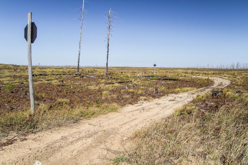 Le Michigan Forest Fire Aftermath Landscape images libres de droits