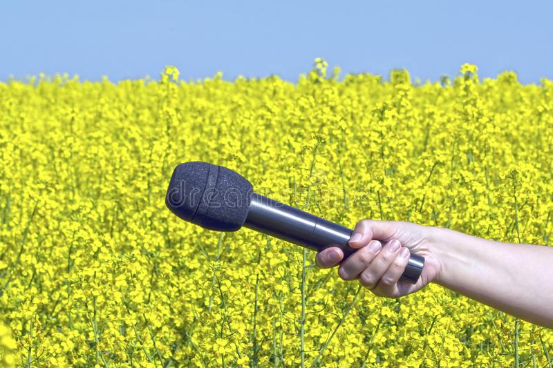 Le microphone à disposition sur un fond de viol jaune fleurit photo stock