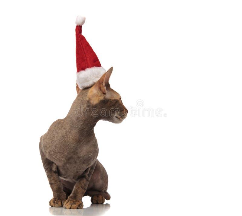 Le minou gris curieux de Santa se repose et regarde pour dégrossir images libres de droits