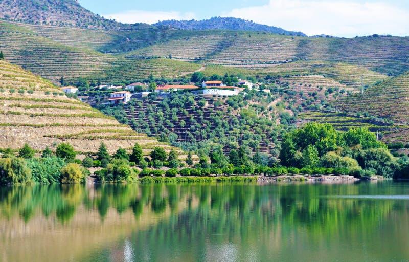Le miroir de l'eau et le vin cultivent - la rivière de Douro images libres de droits
