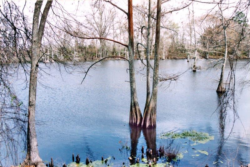Le Mississippi bayou en mars 2002 noir image libre de droits