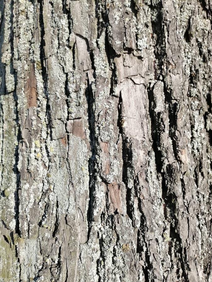 Le modèle de l'écorce d'un vieil arbre photographie stock libre de droits