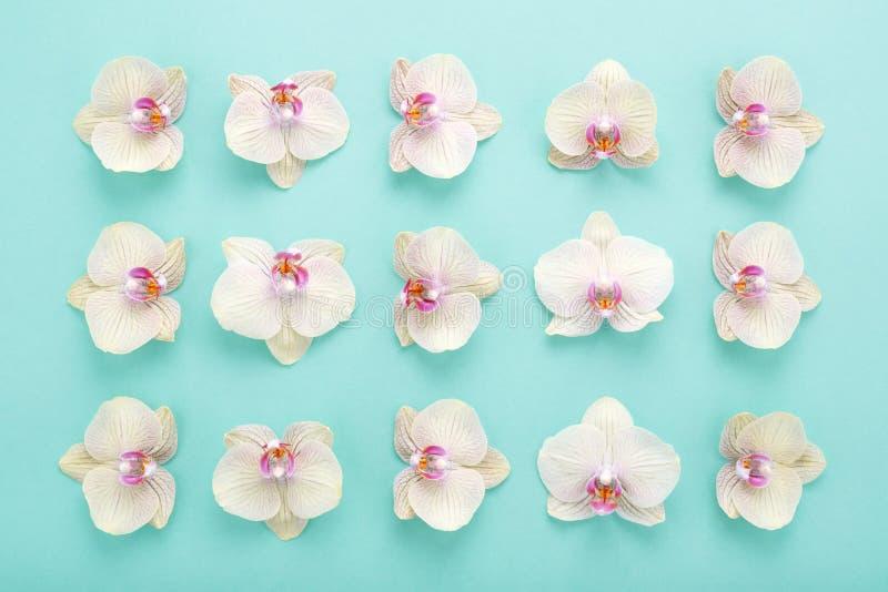 Le modèle géométrique abstrait des orchidées fleurit sur le fond bleu image libre de droits