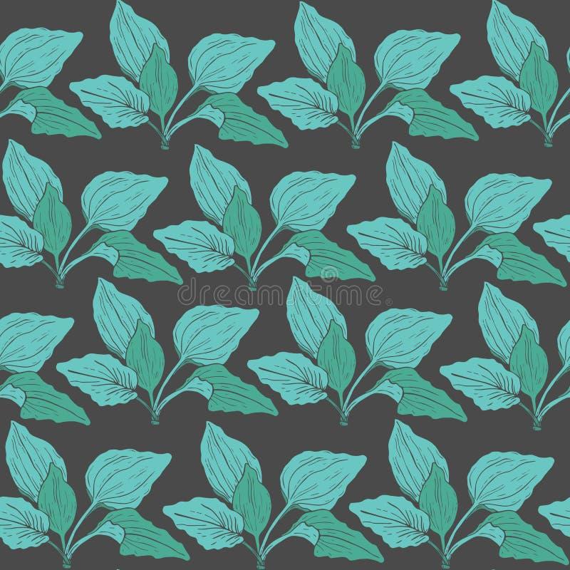 Le modèle sans couture botanique avec le plantain vert part sur le fond foncé Usine herbacée médicinale tirée par la main dedans illustration stock
