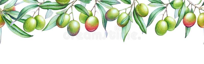 Le modèle sans couture de Horisontal avec l'olivier d'aquarelle s'embranche illustration libre de droits
