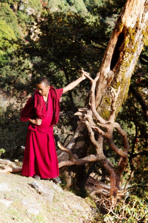 Le moine bouddhiste contemple les racines incurvées du pin image stock