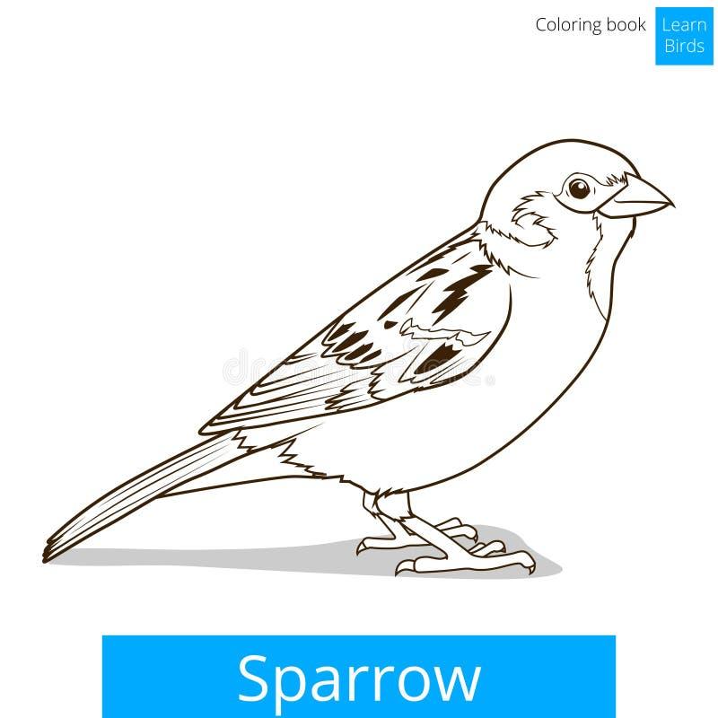 Le moineau apprennent le vecteur éducatif de jeu d'oiseaux illustration stock
