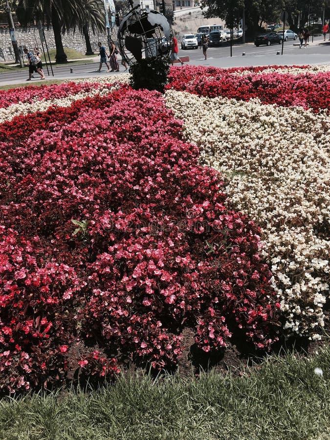 Le monde autour des fleurs photo libre de droits
