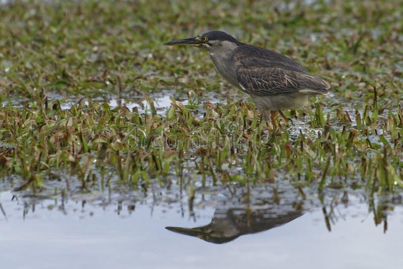 Le monde merveilleux des oiseaux photographie stock libre de droits