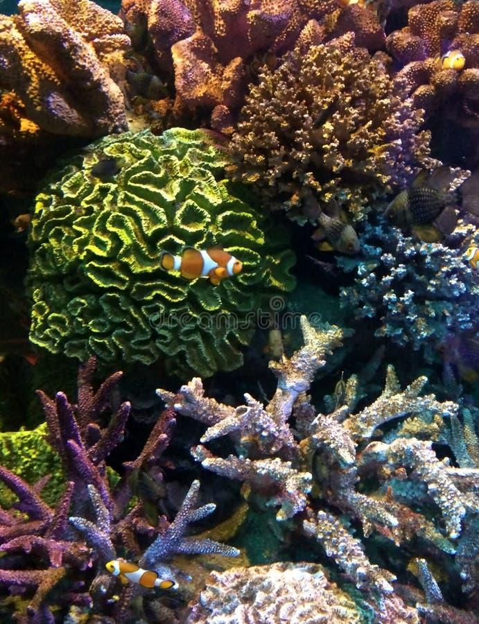 Le monde sous-marin de l'Océan Atlantique photographie stock libre de droits