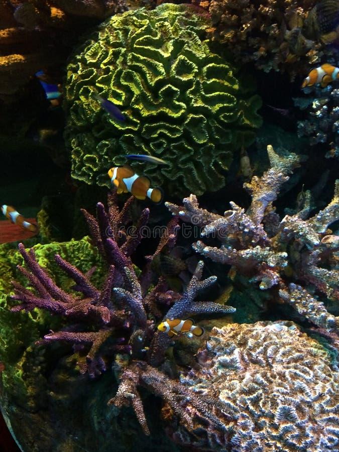 Le monde sous-marin de l'Océan Atlantique photographie stock