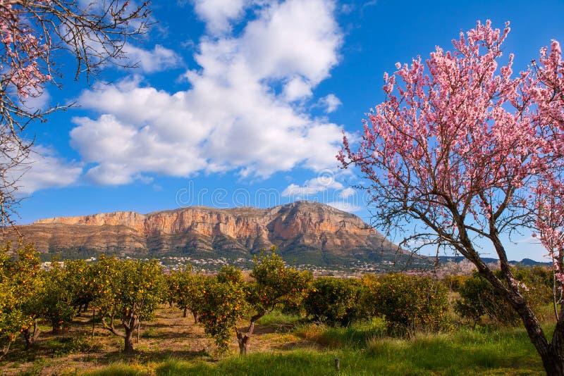 Le Mongo en Denia Javea au printemps avec l'arbre d'amande fleurit image libre de droits