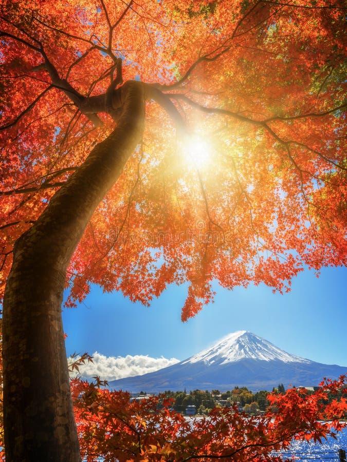 Le mont Fuji en Autumn Color, Japon photo stock