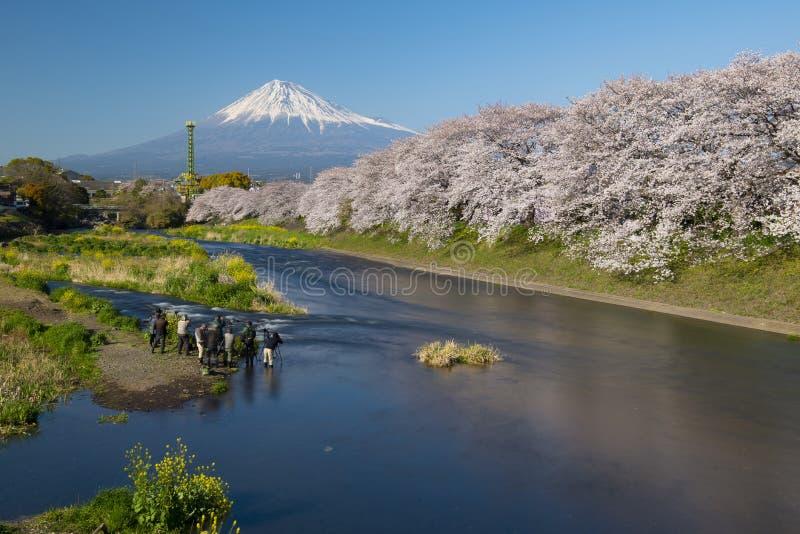 Le mont Fuji et Chery fleurissent à un parc de rive, Shizuoka, Japon photo libre de droits