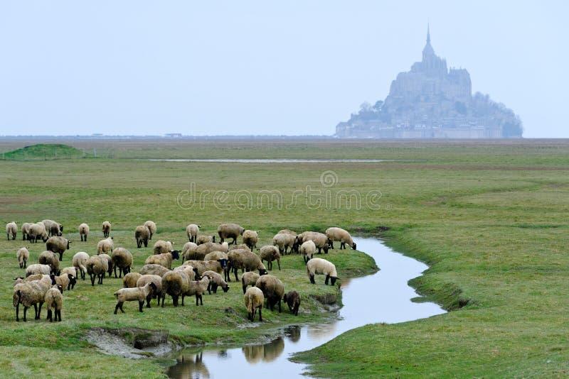 Download Le mont saint michel stock photo. Image of sheeps, mont - 27608428