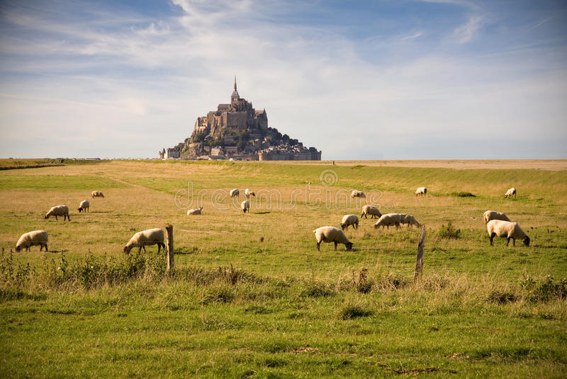 Le Mont-San-Michel e pecore fotografie stock