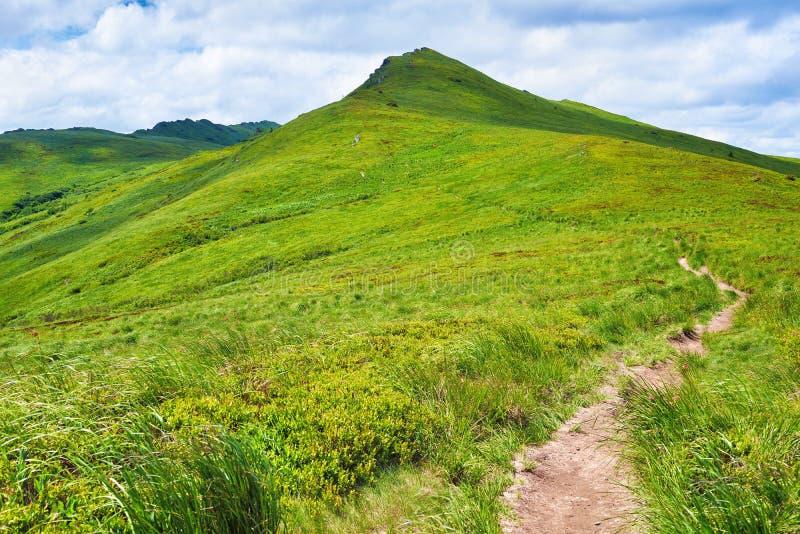 Le montagne dell'erba verde del percorso abbelliscono la collina della natura del fianco di una montagna immagine stock