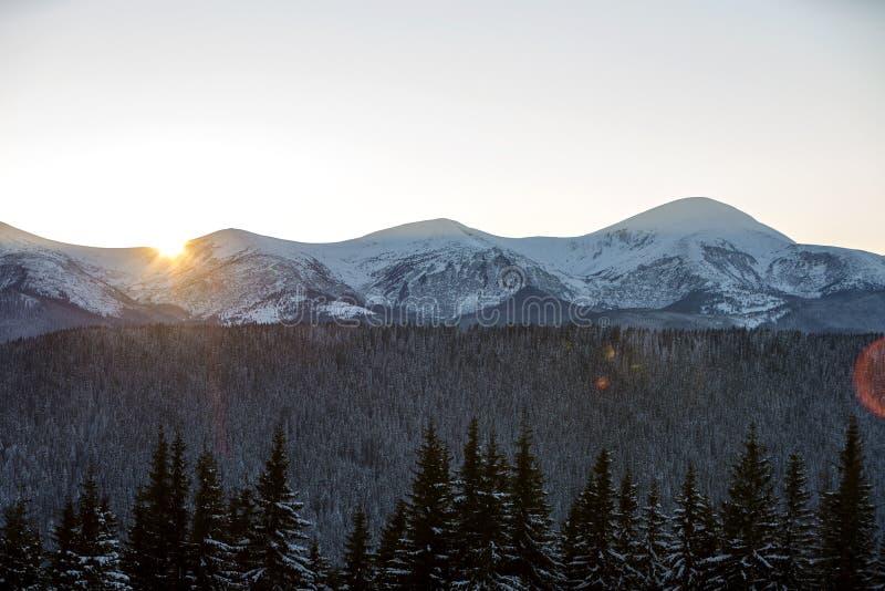 Le montagne dell'inverno abbelliscono il panorama all'alba Chiaro cielo blu sopra la foresta attillata scura dei pini, coperta di immagine stock
