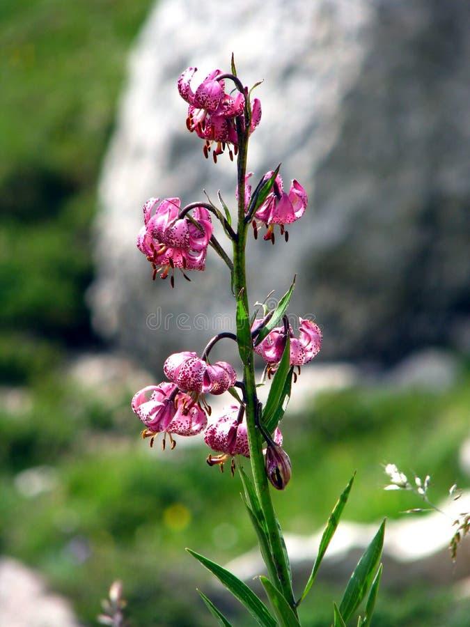 Le montagne hanno chiamato Dolomite in Italia fotografia stock libera da diritti