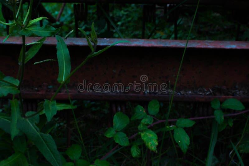 Le morceau rouillé en métal a perdu dans la forêt photos libres de droits