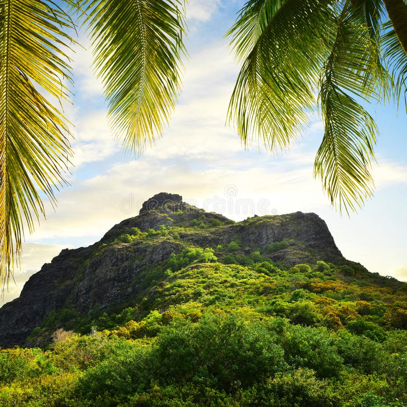 Le Morne Brabant mountain and leaves of coconut palm tree at sunrise. Mauritius island. royalty free stock image