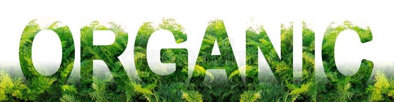 Le mot organique sur le fond d'un champ de plantation des feuilles vertes de carotte Agriculture dans des secteurs écologiquement photographie stock