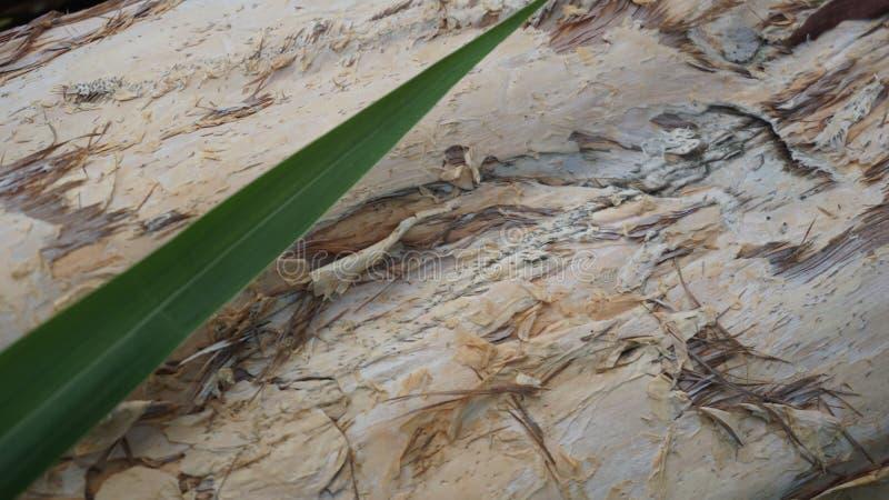 Le motif en bois, la texture en bois peut ?tre employ? comme fond d'une image photos stock