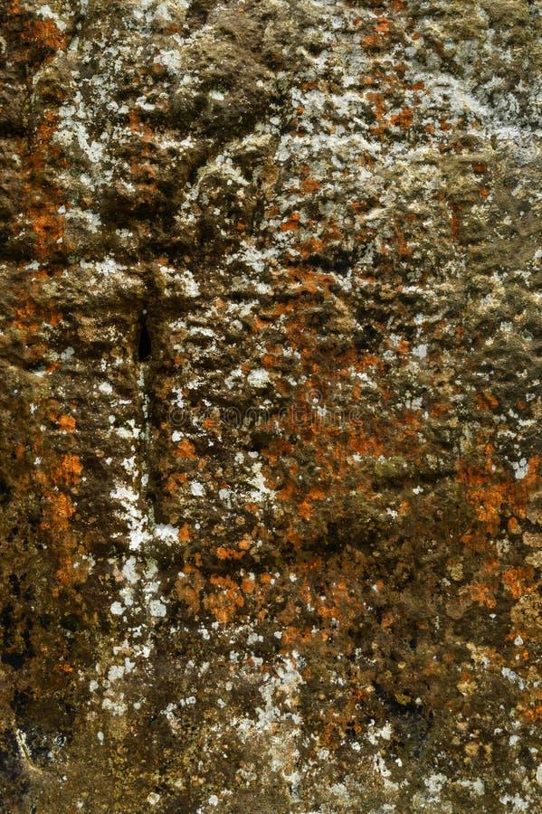 Le moule coloré a été formé sur les roches humides de chaux photo libre de droits