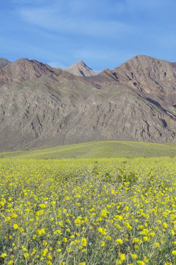 Le Mountain View et le ressort d'or de désert et divers spectaculaire fleurit au sud de la crique de four en parc national de Dea photos stock