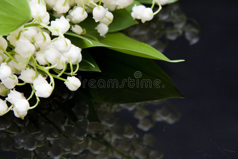 Le muguet photographie stock
