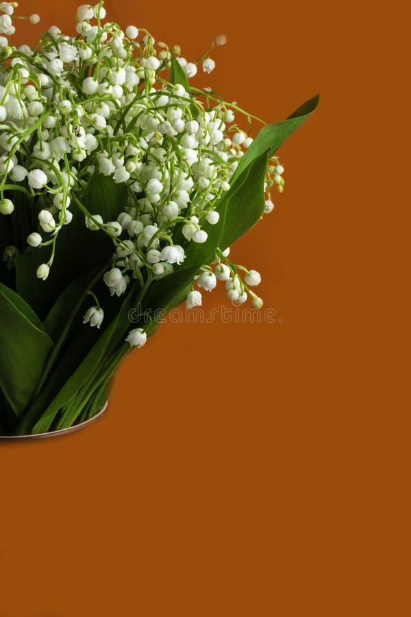 Le muguet parfumé de fleurs de ressort frais sur un fond orange Fond lumineux et juteux du lis sensible de valle images libres de droits