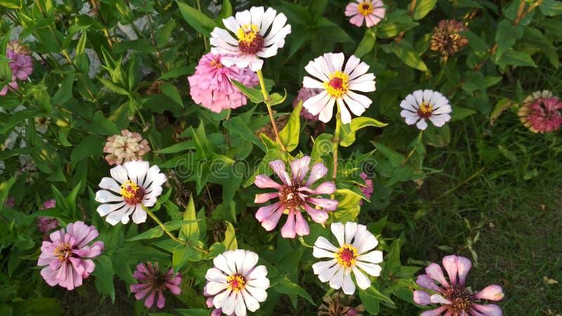 Le multiple a coloré de belles fleurs qui vous rend heureux photographie stock libre de droits