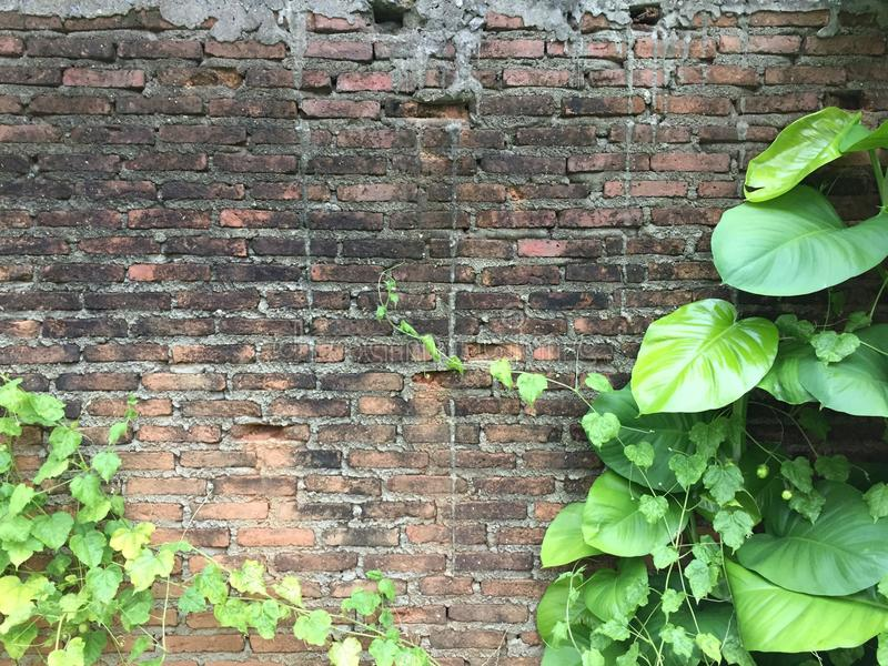 Le mur de briques avec le vert part dans l'arrière-cour photo stock