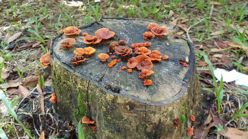 Le mycète sur l'arbre frappent du pied photographie stock libre de droits