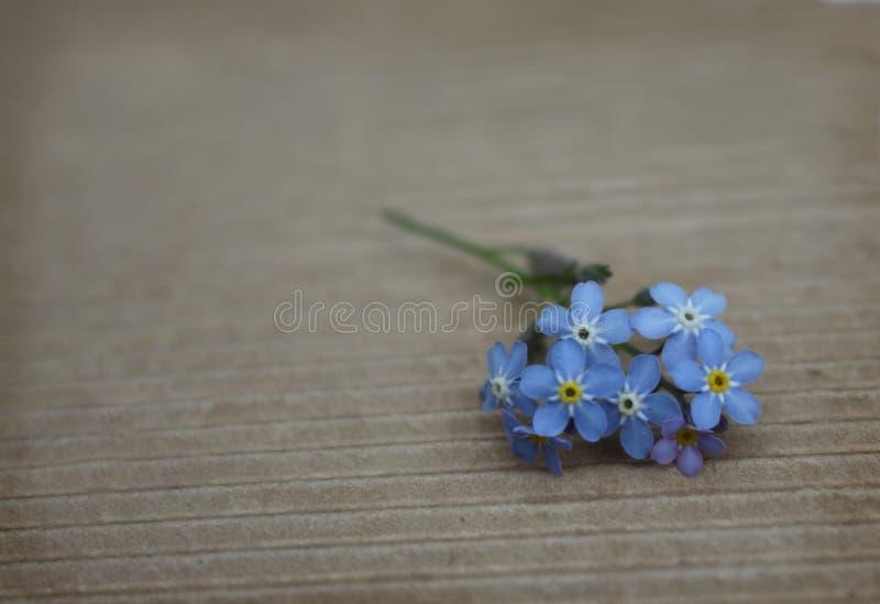 Le myosotis romantique de cru fleurissent le fond de conception florale photographie stock