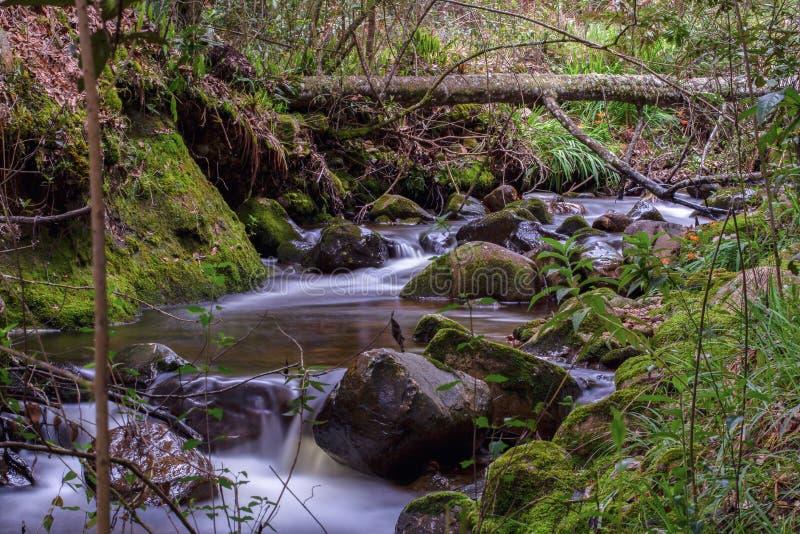 Le né d'une rivière photo libre de droits