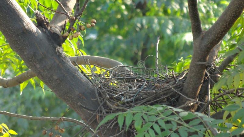 Le nid images libres de droits