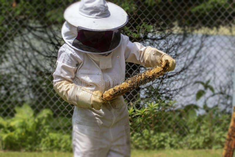 Le nid d'abeilles de contrôles d'apiculteur, photos libres de droits