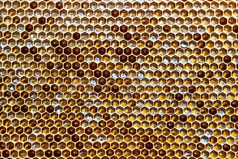 Le nid d'abeilles d'une ruche d'abeille a rempli du miel d'or dans une pleine vue de cadre Texture de fond photos libres de droits