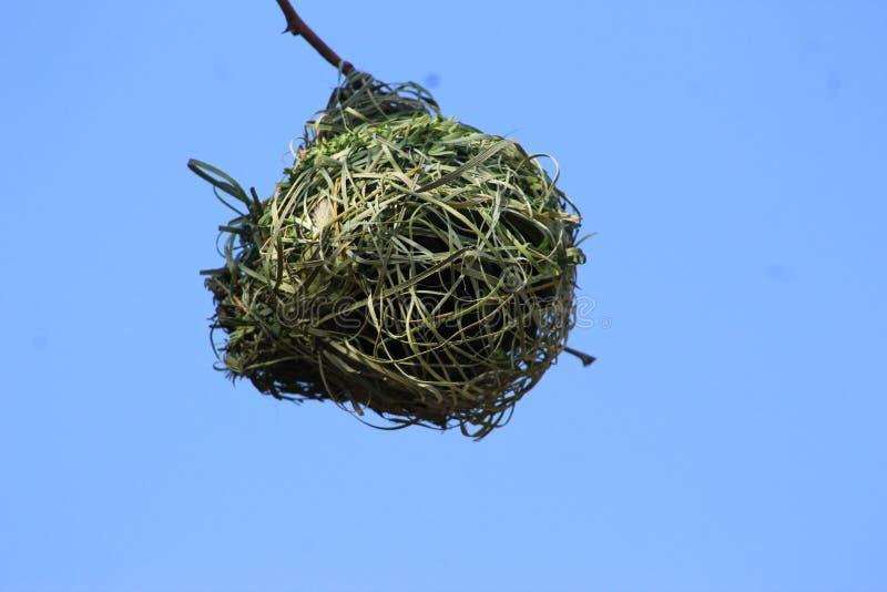 Le nid d'un oiseau capturé en Namibie image libre de droits